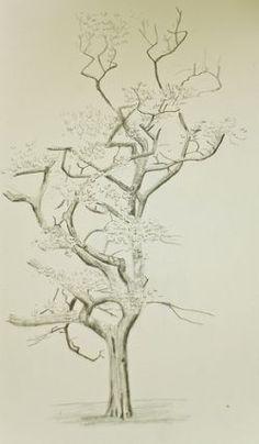 Beautiful Drawings Of Trees Favorite