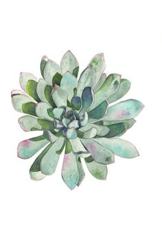 Succulent Print of watercolour painting - - size largest print - Botanical art - Succulent watercolor painting - print Watercolor Landscape Paintings, Watercolour Painting, Painting Prints, Art Prints, Flower Paintings, Watercolor Succulents, Watercolor Flowers, Cactus Watercolour, Succulents Drawing