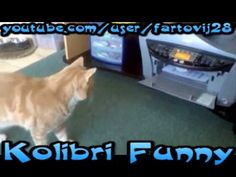 The compilation of clever cats.