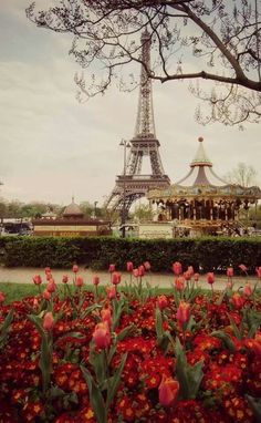 Lovely red flowers near the Eiffel Tower.