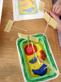 Printable Plant and Animal Cell | How To Make An Animal Cell 3d Model. Do a how pm stunning ideas