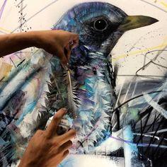 Les Oiseaux de L7M (3)