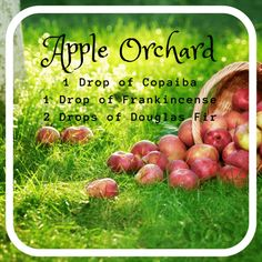 apple orchard diffuser blend