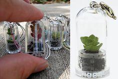 mini terrarium 'pets'