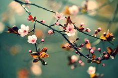 Spiritual Awakening: 22 Major Signs - The Path Of Soul-Infusion - Light Being Messages Fine Art Photo, Photo Wall Art, Custom Crates, Cherry Blossom Japan, Cherry Blossoms, Japanese Tree, Macro Flower, Flower Branch, Blossom Trees