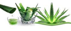 Los 35 usos del Aloe Vera