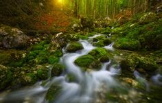 ...bohinj IV... - small creek in the forest above bohinj lake...  All images are © copyright roblfc1892 - roberto pavic. You may NOT use, replicate, manipulate, or modify this image. roblfc1892 - roberto pavic © All Rights Reserved