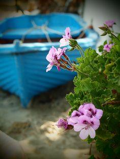 Boat & flowers. kaganista@ya.ru
