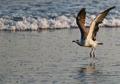 The birds presented a rare beautiful sight of Sea View in Karachi. PHOTO: FARAH KAMAL Clifton Beach, All Gods Creatures, Beautiful World, Heavenly, Allah, Journey, Birds, Sea, Popular