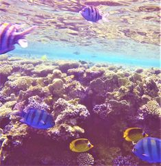 Coral Reefs, Red Sea, Snorkeling, Destinations, Life