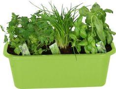 Frische Kräuter schmecken gut und sind gesund - mit diesem praktischen KokoTerra Kräuterkasten Trend können Sie sich einen eigenen Mini-Kräutergarten anlegen. Der Kräuterkasten präsentiert sich in erfrischendem Grün, das Appetit auf die Kräuterküche macht.