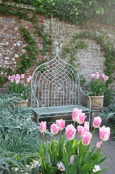 Pashley Manor Gardens - Pink Tulips and Bench by Kate Wilson ............  Cool bench and beautiful pink parrot tulips.