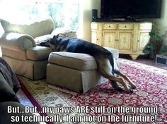 This is SO our Malinois!!