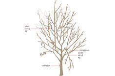 How To Prune Your Fruit Trees - Modern Farmer Prune Fruit, Pruning Fruit Trees, Tree Pruning, Pruning Plants, Straw Bale Gardening, Gardening Tips, Urban Gardening, Tree Diagram, Modern Farmer