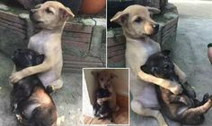 Puppy holds pal in his paws after the doggy duo were rescued -    You can call it puppy love, but these adorable pals just can't keep their paws off each other.     A pair of inseparable stray puppies have been me...