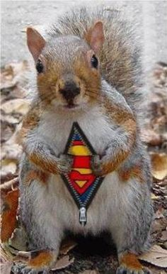 Super Squirrel!!!