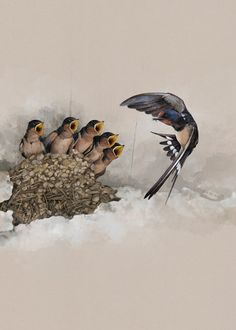 Twelve illustrations of migratory birds were placed on calendar. These birds migrate each year from Europe to Sudan.