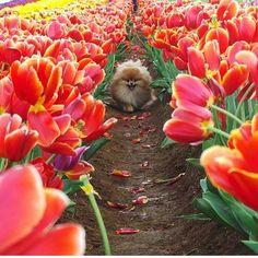 Beautiful flowers @cece.pomeranian .pomeranian