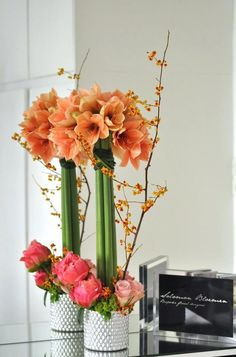 1000 images about amaryllis on pinterest amaryllis for Amaryllis deco
