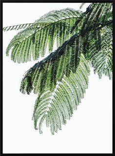 Plakat Palm leaf NORD&CO