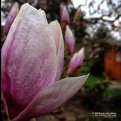 Na endlich – Der Frühling nimmt Fahrt auf   in meinen augen   in my eyes