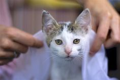 Don't Forget: October Is Pet Wellness Month https://www.petful.com/pet-health/october-pet-wellness-month/