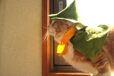 Pat Pat, Moomin Valley, Munchkin Cat, All About Cats, Gremlins, Cats And Kittens, Bridge, Winter Hats, Kitty