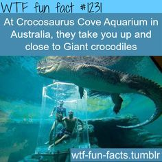 At Crocosaurus Cove Aquarium in Australia, they take you up and close to Giant crocodiles MORE OF WTF FACTS are coming HERE awesome and fun factsONLY