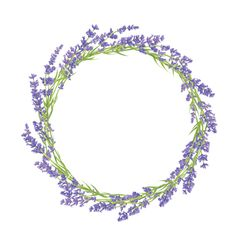 Circle of lavender flowers vector  - by Lidiebug on VectorStock®