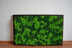 Moss wall art, Frame horizontal garden, Home decoration, office decor, Picture