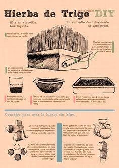 Víctor Paiam: Infografía - Wheatgrass