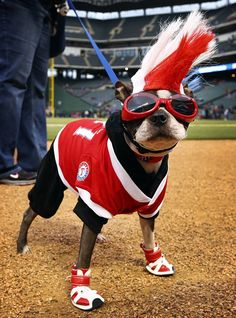 Sadie, a Boston terrier, at the eighth annual Bark in the Park at Rangers Ballpark in Arlington, May 2, 2013. (Tom Fox/Dallas Morning News)
