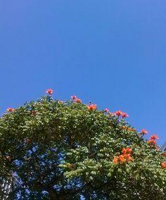 Um dia azul... #bomdia by jezz_rodrigues