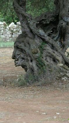Mother Earth, Mother Nature, Weird Trees, Tree People, Tree Faces, Unique Trees, Nature Tree, Weird And Wonderful, Art Of Living