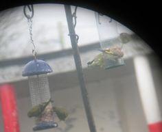 Scoil Muire Banríon Edenderry Bird Feeders, Outdoor Decor, Green, Home Decor, Interior Design, Home Interior Design, Home Decoration, Decoration Home, Interior Decorating