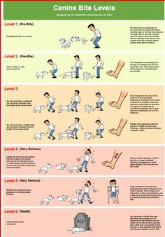 """How many of us have heard someone say """"my dog just bit out of nowhere!"""" ? The fact is, most dogs will often give many, many warnings prior to an actual bite. Familiarizing ourselves with our dog's body language is the first step in helping to prevent a bite, but we should also be aware of the different levels of bite thresholds, and NOT ignore situations where our dog ends up """"snapping"""" and """"lunging"""" - for these are just precursors."""