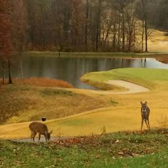 Sultans Run Golf Course Jasper IN