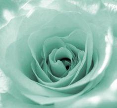 Mint green rose- my favorite color! Color Menta, Mint Color, Green Colors, Green Aqua, Coral Pink, Mint Green Aesthetic, Aesthetic Colors, Pastel Mint, Pastel Shades