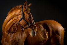 Horse+Photography | Equine Photographer, Horse Photography » Mark Beaumont | Equine ...