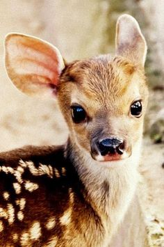 Deer cute animals adorable deer animal pictures
