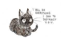 This little cat reminds me much of the black cat in 'Kiki's Delivery Service'
