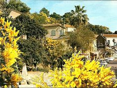 Bormes Les Mimosas, Côte d'Azur, France - in springtime full of mimosas Provence, Le Mimosa, South Of France, Holiday Destinations, Spring Time, Camper, Landscaping, Coins, Europe