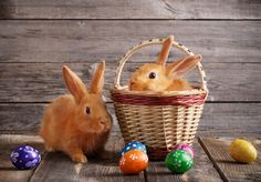 3 Easy Eco-Friendly Easter Basket Swaps The Effective Pictures We Offer You Ab Easter Bunny Pictures, Happy Easter Bunny, Easter Colors, Pictures Images, Easter Baskets, Eco Friendly, Origins, Rabbits, Mugs