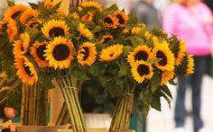 Beautiful Sunflowers Bouquets