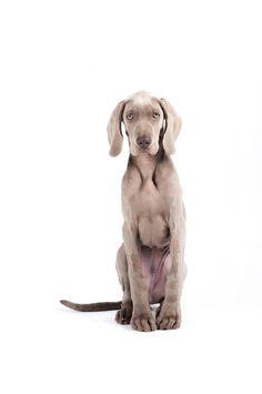 Looks like my Heidi when she was a pup.