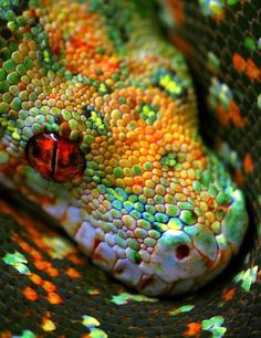 Snake of beautiful jewels of color. by Eva