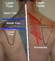 Body Map: Mid-Back/Thoracic (Athletes Treating Athletes)