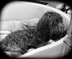 Dog tired........