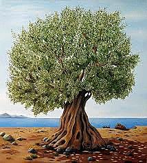 olivo-otro