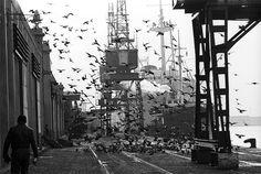 Colita - Barcelona Puerto de Barcelona, 1966